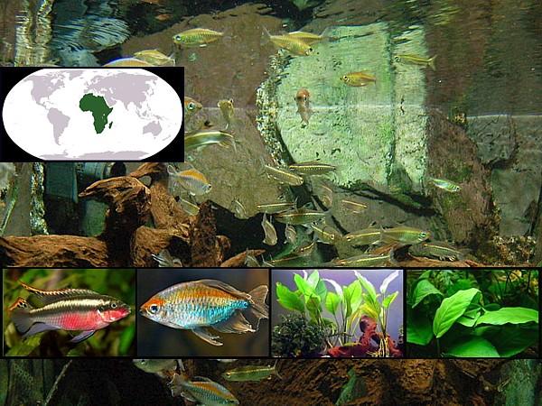 peces fluviales africa destacada