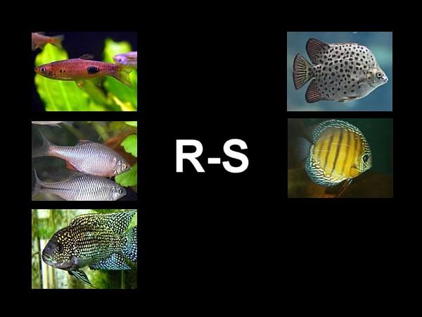 atlas destacada R-S