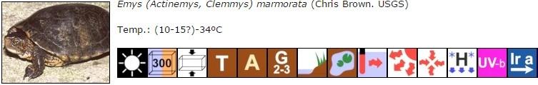 Emys (Actinemys, Clemmys) marmorata