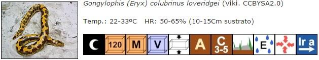 Gongylophis (Eryx) colubrinus