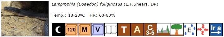 Lamprophis (Boaedon) fuliginosus
