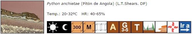 Python anchietae