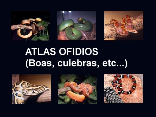 Atlas ofidios