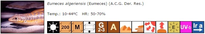 Eumeces algeriensis