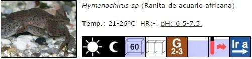 Hymenochirus sp