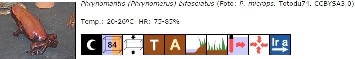 Phrynomantis (Phrynomerus) bifasciatus