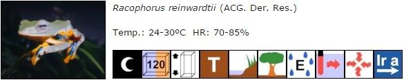 Racophorus reinwardtii