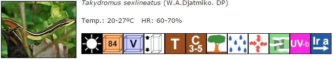 Takydromus sexlineatus