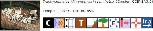 Trachycephalus (Phrynohyas) resinifictrix