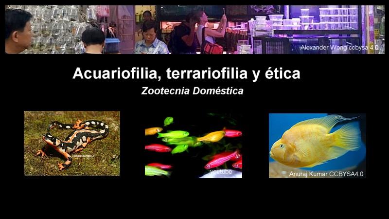Acuariofilia, terrariofilia y ética... Acuariofilia-y-etica-destacada