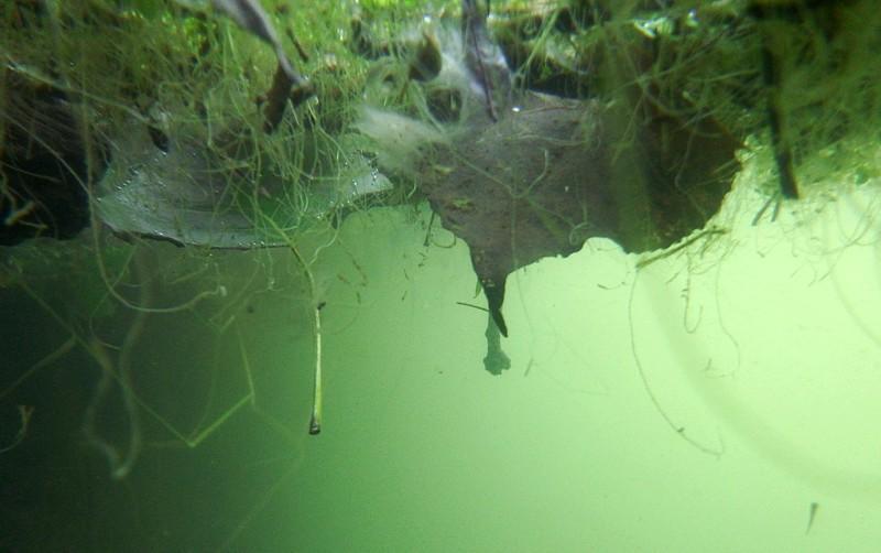 Microbiotopo flotante