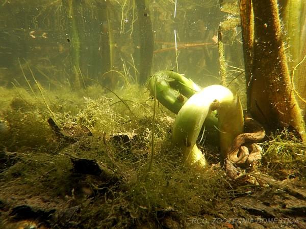 Bentos biotopo fluviá