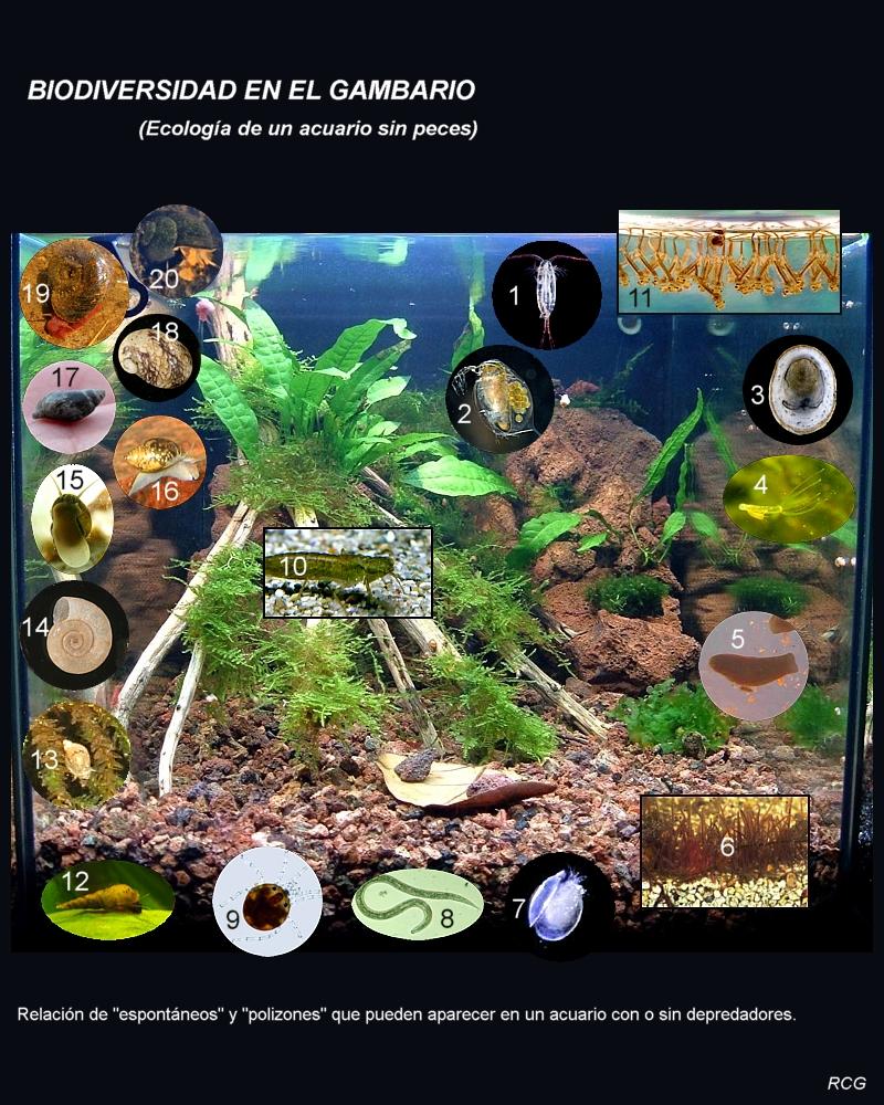 Invertebrados acuario
