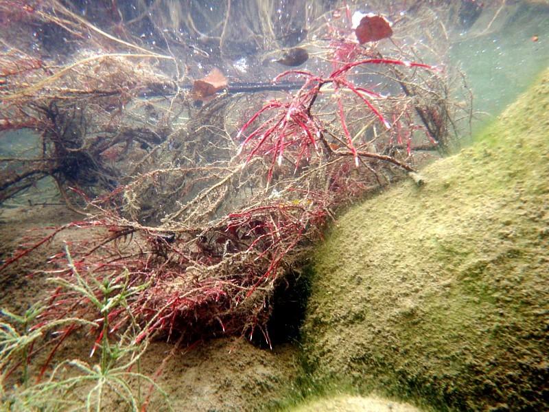 Raíces de arbusto captando agua y nutrientes, Llierca