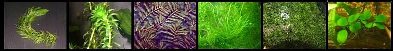 Acuaterrario, plantas acuáticas