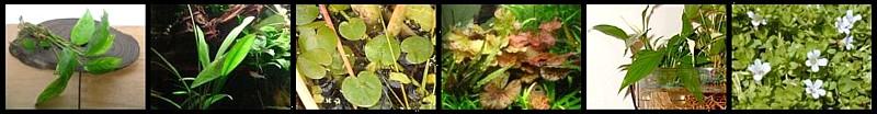 Plantas palustres emergidas