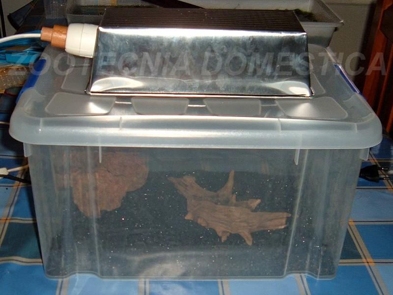 Acuario caja plástica
