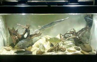 wood aquarium
