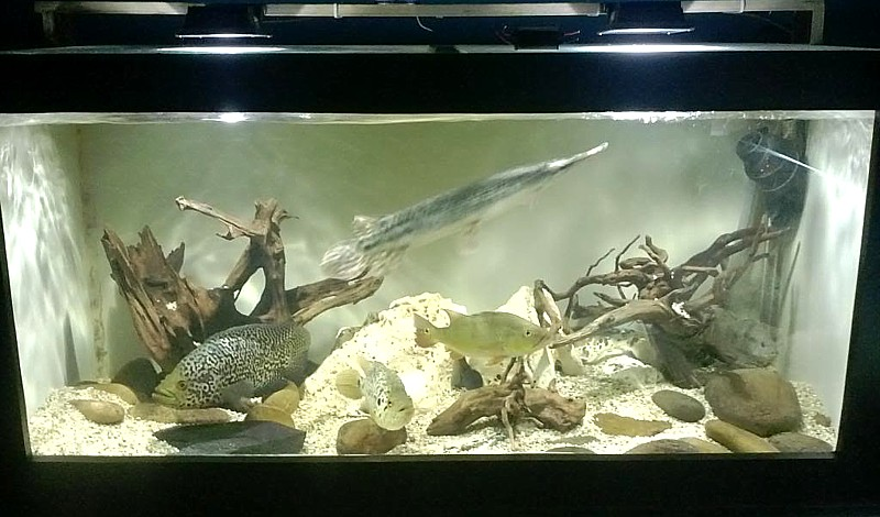 wood aquarium