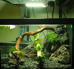 Compacta en acuario