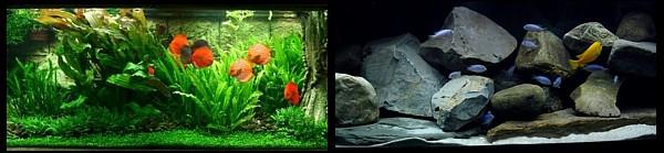 Espectro luz acuario