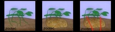 Plantado epífita
