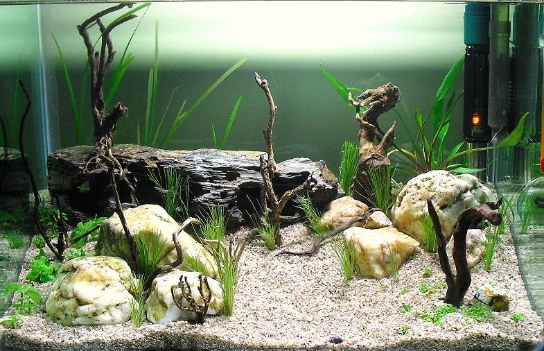 El acuario de Roberto