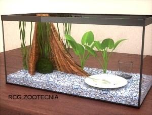Alimentación peces