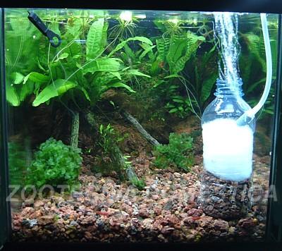 filtro caja botella
