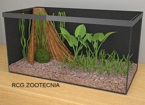 Biotopo bosque sumergido