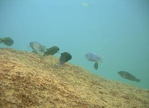Malawi biotope
