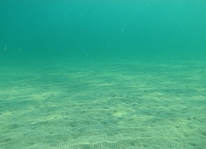 Biotopo playa arenosa
