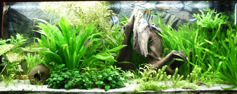 Biotopo acuario biotopo geogr fico for Acuario comunitario