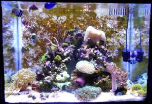Reef cube