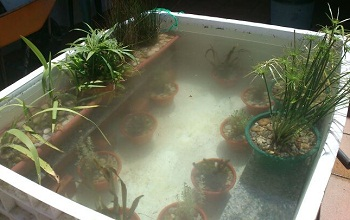 Estanques en terraza o balc n for Como hacer un estanque economico