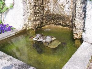 Estanque tortugas