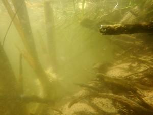 Fluvia tramo medio Seriñá (Serinyà)