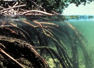 Biotopo manglar