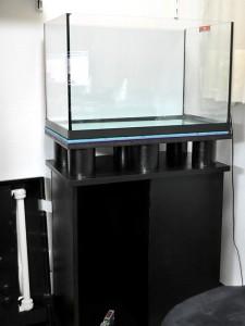 Montaje acuario apistogramma