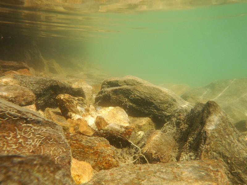 Fondo estanque alpino