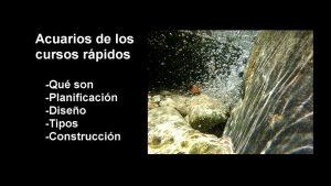 acuarios cursos rapidos