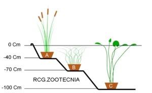 Organización vegetal estanque
