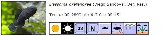 Ficha elassoma okefenokee