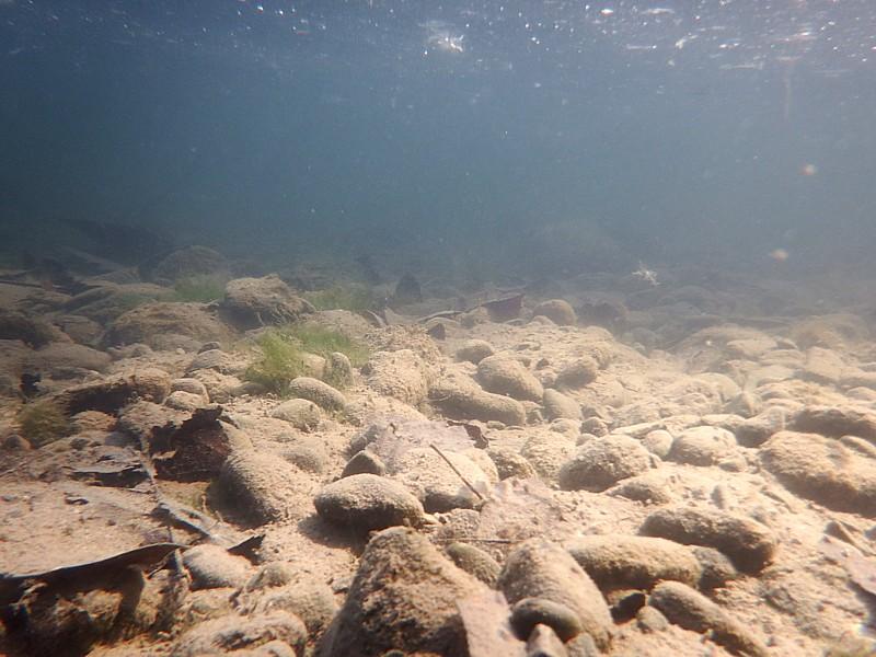Biotopo lótico lento, Río Fluviá