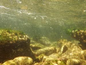 Biotopo lotico, arroyo