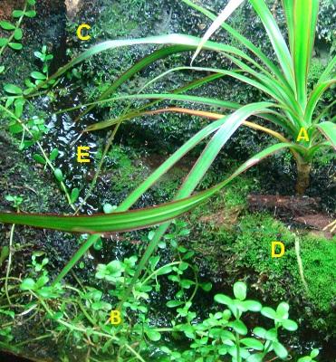 Vivario, descripción flora