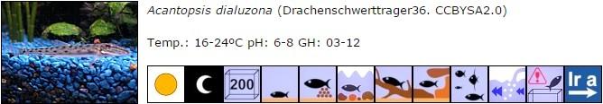 Acantopsis dialuzona