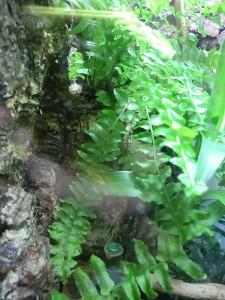 Acuario como terrario