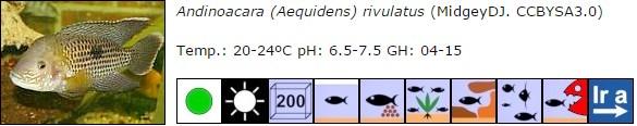 Andinoacara (Aequidens) rivulatus