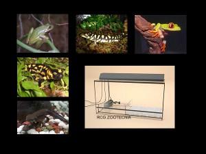 Anfibios vida anfibia